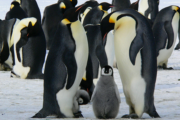 Google Real Time Penguin Update 4.0